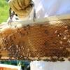 Miele naturale italiano in favo