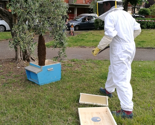 Recupero sciami d'api Firenze
