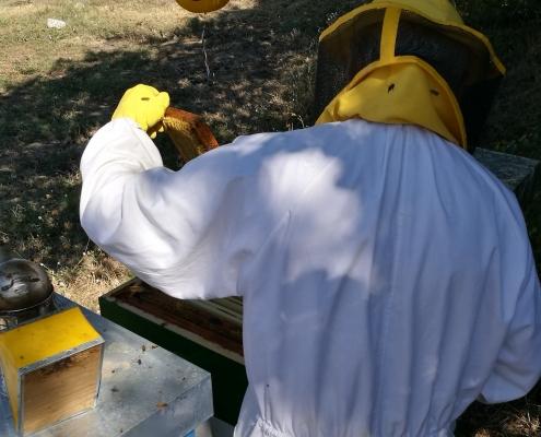 Attrezzi apicoltura