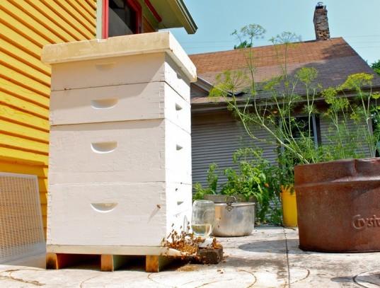 Salvare le api con l'apicoltura urbana