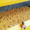 polline d'api toscano fresco