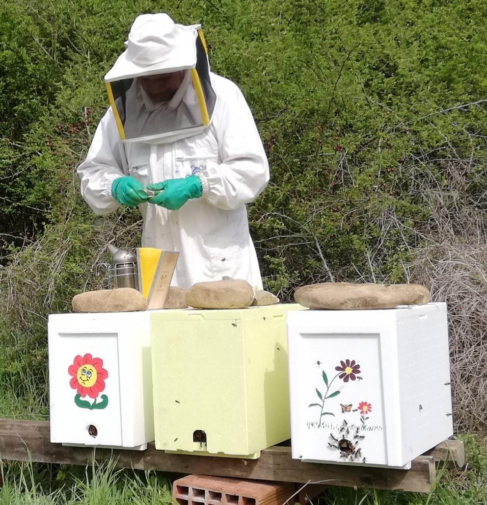 le api sciamano Apicoltore Feri