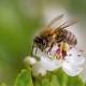 Quanti fiori devono visitare le api