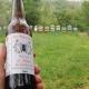 Birra al miele in apiario