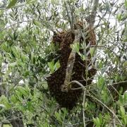 Dove vivono le api