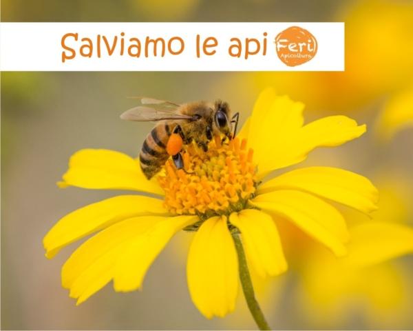 Salviamo le api